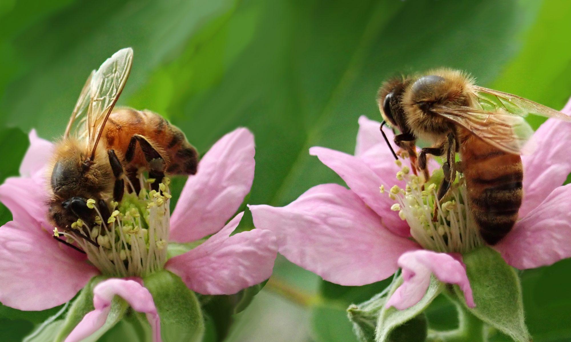 Cirencester Beekeepers